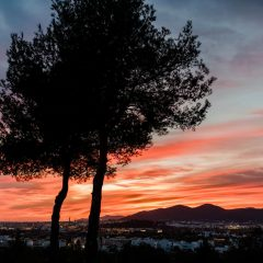 Trees with wonderful red sky in Ibiza